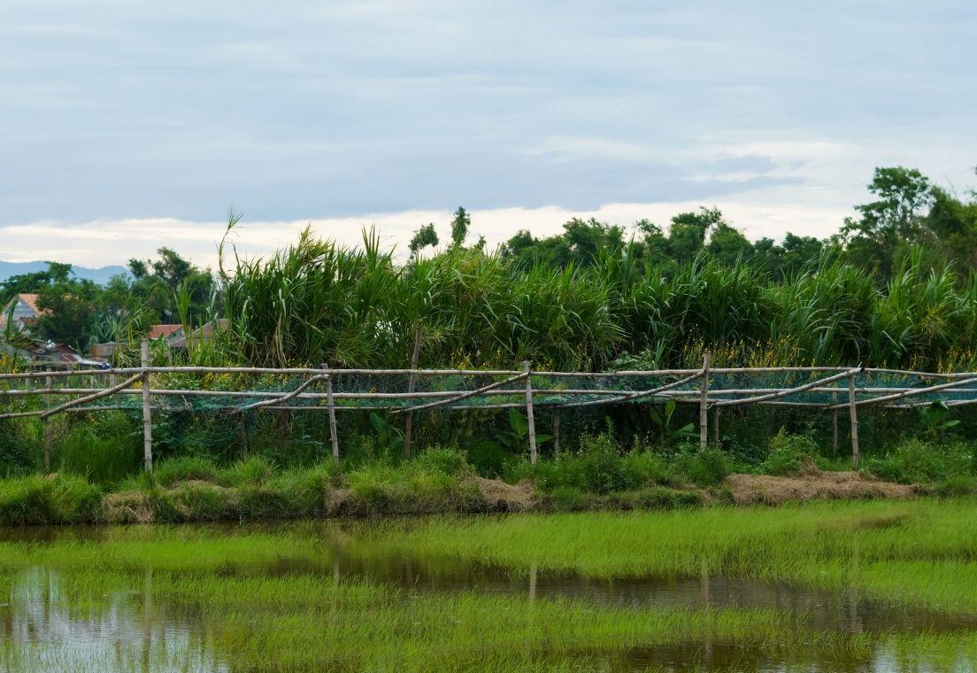 hang-rao-sinh-hoc-living-fence-trong-vuong-rung